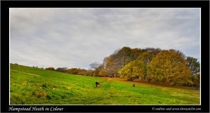 Hampstead Heath in Colour by Andrew-and-Seven