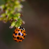 Ladybird by mj-magic
