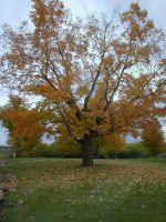 tree- big and orange by Exor-stock