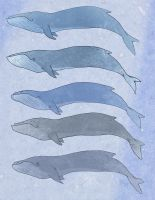 a group of whales... by Mensaman