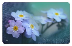 Forget Me Not by Straynj3