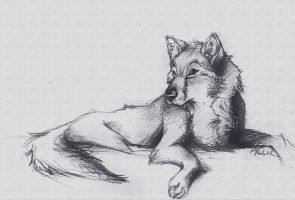 Wolf sketchiness by ISHAWEE