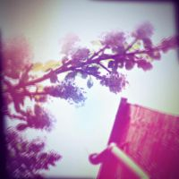 Holga Print 12 - Skyward by uselessdesires