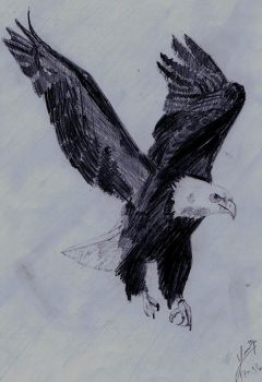 eagle by weidy04