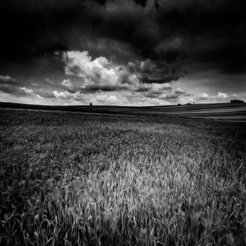 field by szuwar