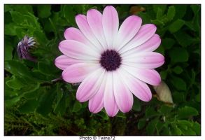 Flower 20 by Twins72