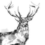 Stag Illustration by Nonsense-Prophet