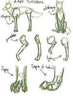 Wolf: legs and paws tutorial by Gli-Na