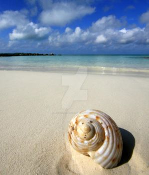 Shell we..... by PatriciaVazquez