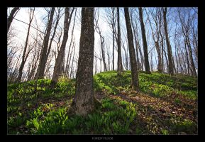 Forest Floor by tfavretto