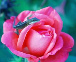 Lizard On Rose by KissofCrimson