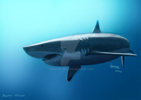 Grand requin blanc speed painting by Wahya-art