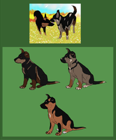 CLOSED - Working Line GSD Pups- Greco X Alexis by Bella-Prado