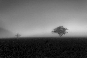 Tristesse... by ulivonboedefeld