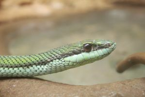 Snake #2 (picture 2) by Obizu
