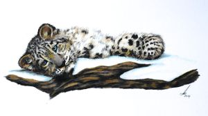 Snow Leopard cub by salt25