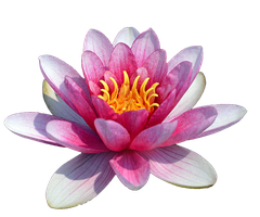 Water Lily by FrankAndCarySTOCK