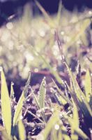 Its a dew world by msteenphotographer