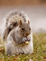 Hungry squirrel by RinFlorin