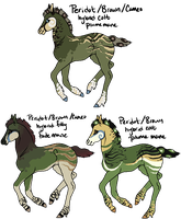 Peridot x Seal Brown/Cameo foals by gyngercookie