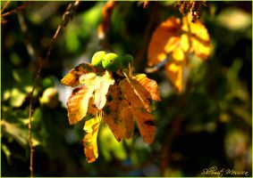First signs of autumn by ShlomitMessica