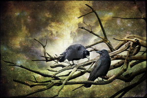 Two Crows by Lindalees