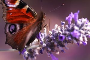 Butterfly 07 by yvaine2010