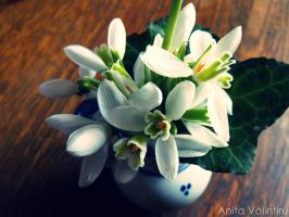 Snowdrop or Galanthus nivalis by Rouge07