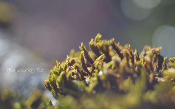 Nature's Art - The Moss by SarembaArt