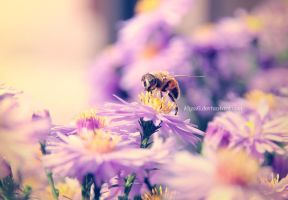 Bee II by Alyss6