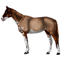 Horse Adoptable 1 by Silver-Brooke-Stable