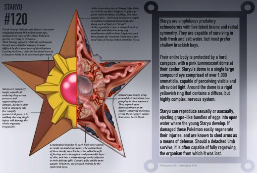 Staryu Anatomy- Pokedex Entry by Christopher-Stoll