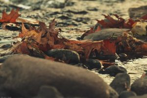 Leaves On The River by WickedOwl514