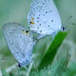 Butterfly Lovers Concerto by mj-magic