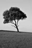 one tree hill by thermalraven