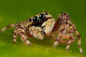 Posing Spider by ilovelost456