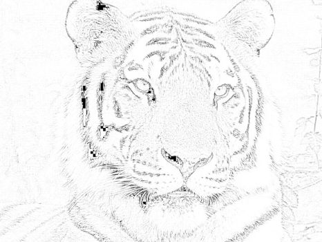 Tiger Sketch by CoNqUeR-TiMe