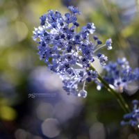 blue sparks by akthuro