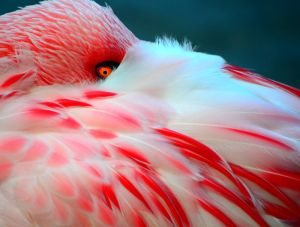 Flamingo by CoreyChiev