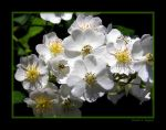 White as Snow by David-A-Wagner