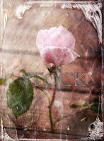 Textured-Rose-2 by Evil-e33
