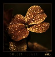 golden flower by klefer