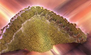 tweak test Tim's Chalenge by Topas2012