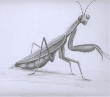mantis by stuess