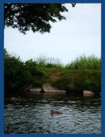From The Boat - Ducks and Tree by Sutefu-Kasaichi