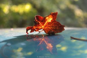 burning leaf by m00nchild313