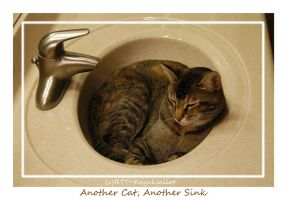 Another Cat, Another Sink by kayaksailor