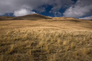 Burnt grass... by vincentfavre