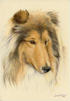 Collie portrait by LucieOn