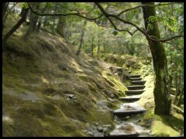 J:Path in the forest by zer0graph